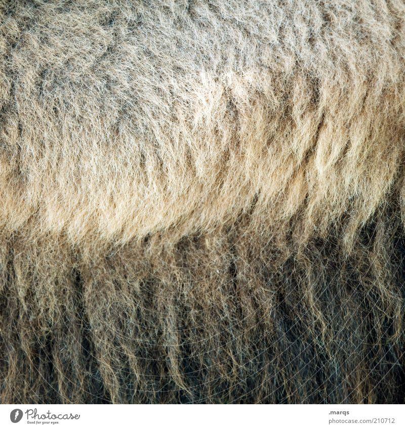 Styling schön schwarz braun weich Fell exotisch kuschlig Geborgenheit Wolle Strukturen & Formen üppig (Wuchs) Kamel Licht