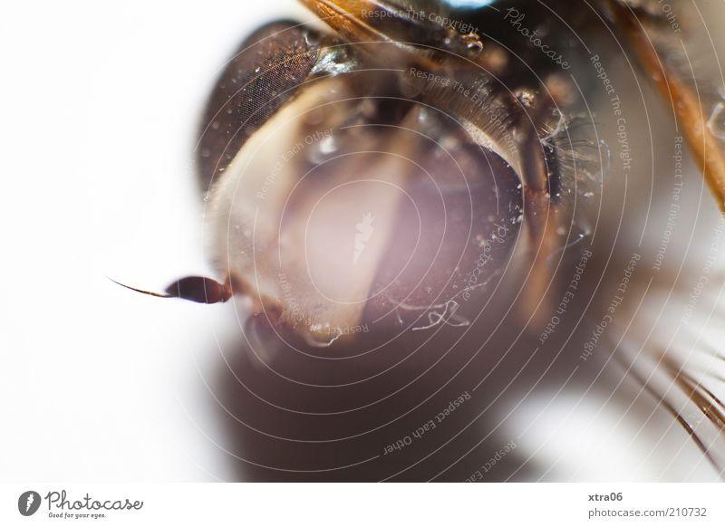 hochschauen Tier authentisch Insekt Facettenauge Auge Fühler Schatten Farbfoto Nahaufnahme Detailaufnahme Makroaufnahme Hintergrund neutral Tierporträt Blick