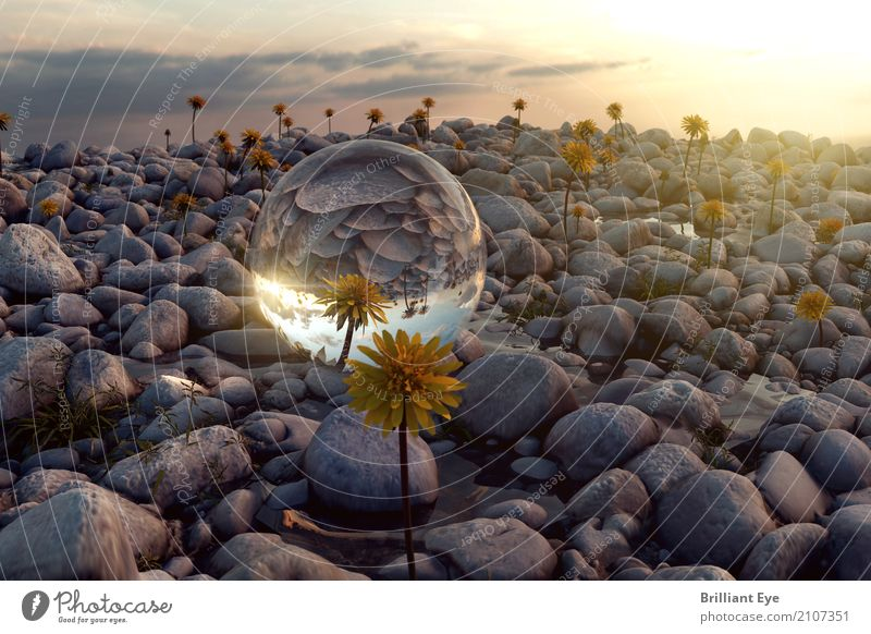 Natur widerspiegeln Pflanze Sommer Sonne Landschaft Wärme Umwelt Stein Stimmung liegen Glas einfach rund Schutz Sommerurlaub nah