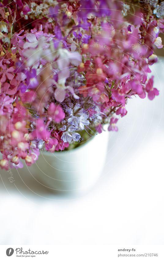 Feldblumen weiß schön Blume Blüte rosa violett Blühend Blumenstrauß Duft harmonisch Vase Blumentopf Dinge sommerlich Blumenvase Wildpflanze
