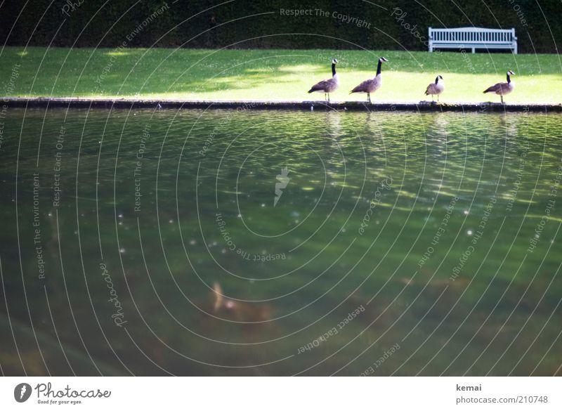 4 Freunde Natur Wasser grün Sommer Tier Wiese Landschaft Umwelt Park Wärme Vogel Wellen stehen Bank Tiergruppe Wildtier