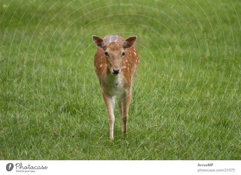 Tiere Natur Wildtier Hirsche Reh