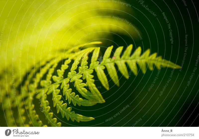 Im Wald II Natur grün Pflanze Sommer Blatt gelb Farbe Umwelt frisch ästhetisch Wachstum natürlich Sträucher Urelemente Dekoration & Verzierung Sauberkeit