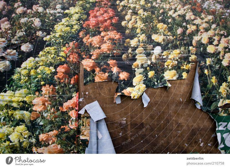 Sag es mit Blumen... schön alt Blume Pflanze Sommer Wand Blüte Garten Holz Park Papier kaputt Wandel & Veränderung Freizeit & Hobby Kultur Werbung