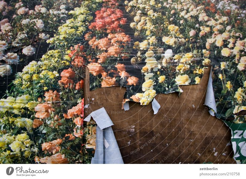 Sag es mit Blumen... schön alt Pflanze Sommer Wand Blüte Garten Holz Park Papier kaputt Wandel & Veränderung Freizeit & Hobby Kultur Werbung