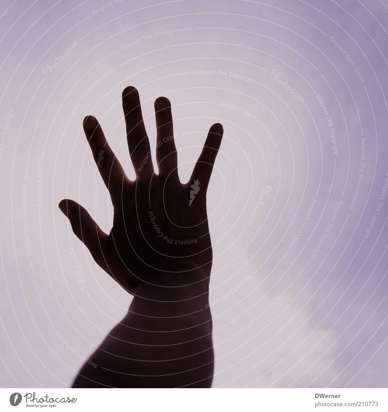 hands up Mensch Arme Hand Umwelt Himmel Sonnenfinsternis Klima leuchten ästhetisch dünn rosa Begeisterung Euphorie Macht Leidenschaft Kontakt stoppen Finger
