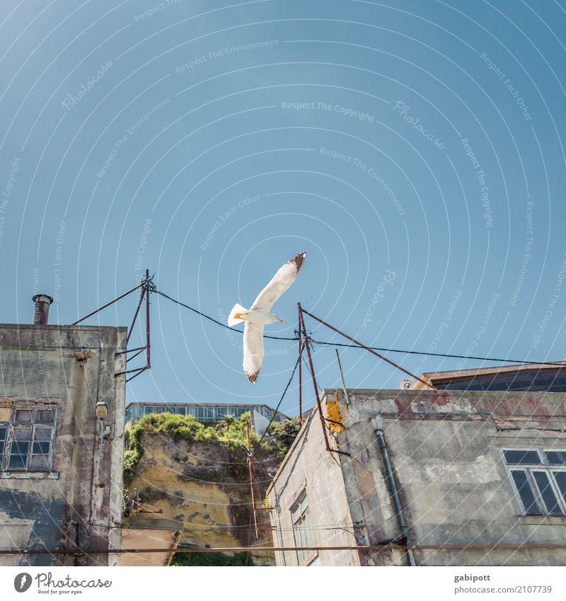Froschperspektive auf Vogel Himmel Ferien & Urlaub & Reisen Sommer Stadt Farbe Haus Tier Wand Glück Mauer Freiheit Fassade fliegen Horizont Luftverkehr