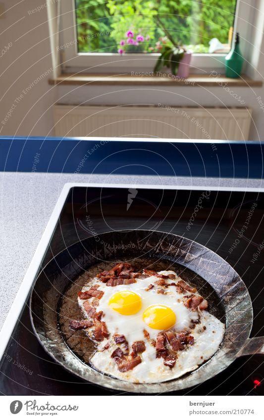 sunny side up schwarz Fenster 2 Wohnung Glas Kochen & Garen & Backen Küche Häusliches Leben Ei Fett Heizkörper Orchidee Herd & Backofen Keramik Speise