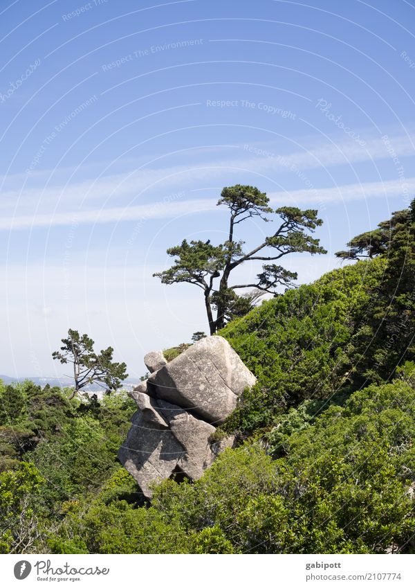 steingarten Himmel Natur Ferien & Urlaub & Reisen Pflanze Landschaft Baum Erholung Ferne Wald Leben Umwelt Wege & Pfade Tourismus Ausflug Zufriedenheit wandern