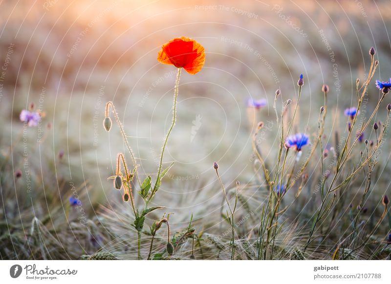 Insektenhotel 2 Natur Ferien & Urlaub & Reisen Pflanze Sommer Landschaft Blume rot Erholung ruhig Umwelt Wiese natürlich Zufriedenheit Feld Erde Idylle