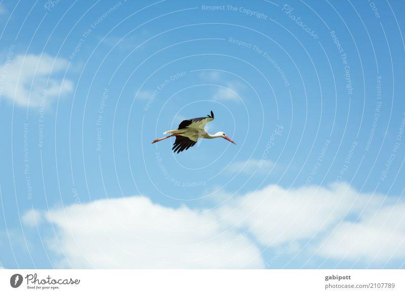 Geburtenrate steigend Kind Himmel Natur blau Sommer weiß Sonne Tier Wolken Umwelt fliegen Vogel Wildtier Schönes Wetter hoch Klima