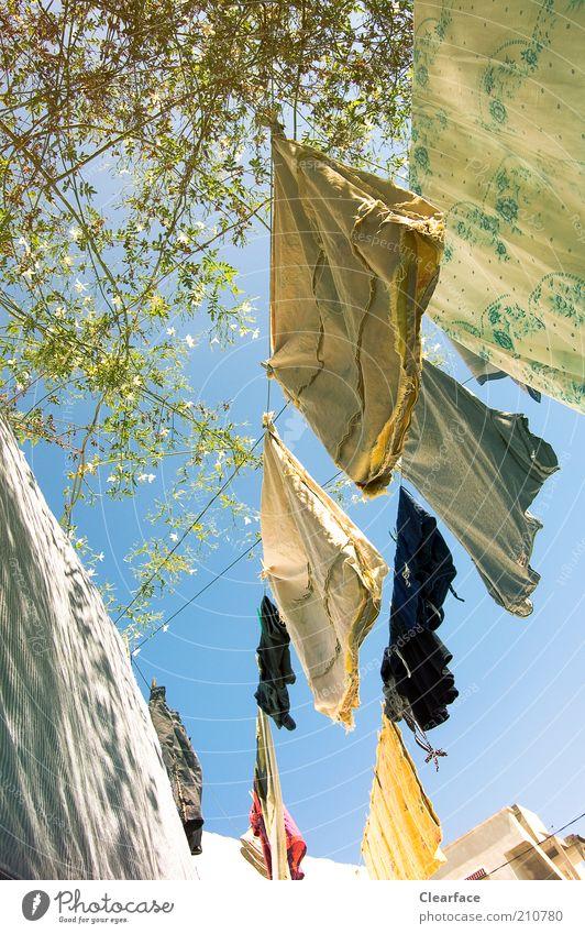 Waschtag Himmel Sommer Wärme Zufriedenheit Zusammenhalt Wäsche Blauer Himmel trocknen aufhängen Wäscheleine Zweige u. Äste Energiesparer