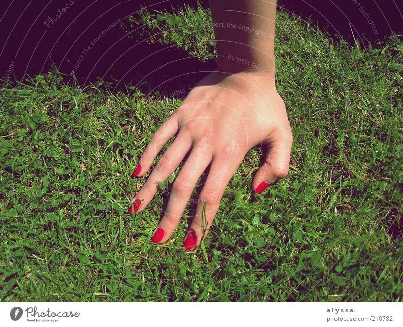 Hand in Hand. feminin 18-30 Jahre Jugendliche Erwachsene Gras grün rot Farbfoto Schatten Frauenhand abstützen Nagellack lackiert Fingernagel Sonnenlicht