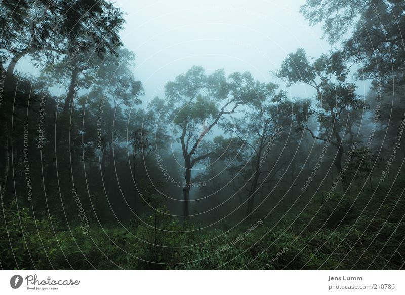 The Mist Natur Nebel Urwald blau grün Einsamkeit Berghang kalt nass Farbfoto Außenaufnahme Menschenleer Morgen Weitwinkel Tau feuchtkalt Baum Wald