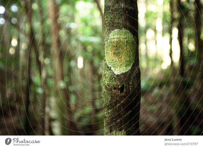 Monsters, Inc. Baum frisch grün Naturwuchs dünn Farbfoto Außenaufnahme Menschenleer Tag Schwache Tiefenschärfe Wald Baumrinde Zeichen Strukturen & Formen