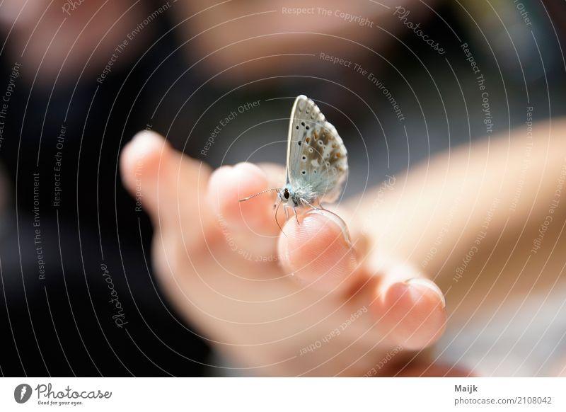 Leptir afternoon Natur Tier Schmetterling Flügel 1 genießen authentisch braun grau rosa schwarz weiß Vertrauen ruhig elegant Umwelt schönheit sensibel butterfly