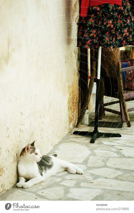 Siesta! Ferien & Urlaub & Reisen Sommer ruhig Tier Haus Erholung Wand Katze Stein Mauer Zufriedenheit Fassade liegen schlafen weich beobachten