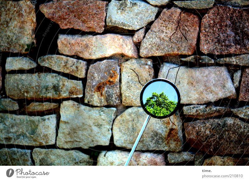 Insight Outside Baum grün Wand Stein Mauer Metall groß Felsen Perspektive Metallwaren Spiegel Motorrad dick Furche Kleinmotorrad