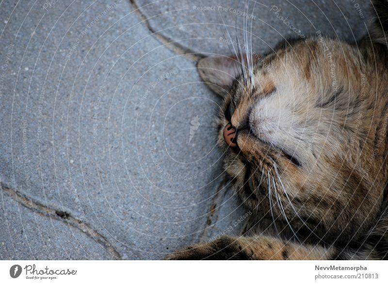 RELAX Tier Haustier Katze 1 liegen niedlich Zufriedenheit grau Stein Farbfoto Außenaufnahme Fell Steinplatten ruhig Pause kopfvoran Herumtreiben freilebend
