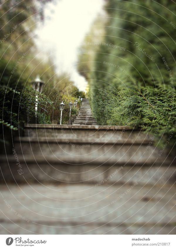 142 Gründe stehen zu bleiben Ferne oben Garten Stil Wege & Pfade elegant Treppe groß ästhetisch Lifestyle Häusliches Leben Unendlichkeit Schutz Reichtum Tanne