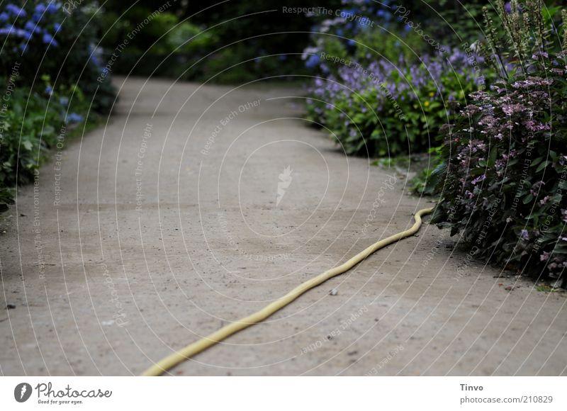 Garten Eden Pflanze Erde Blume Sträucher Grünpflanze Park Wege & Pfade Wegkreuzung liegen biegen Schlauch Wasserschlauch Bewässerung Kulturlandschaft quer
