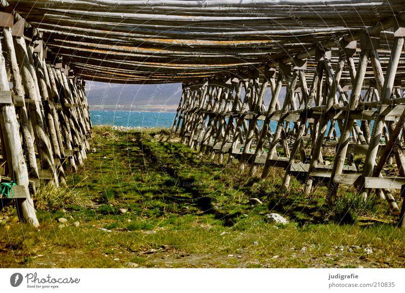 Island Natur Wasser alt Ferne Wiese Gras Holz Landschaft Küste Vergänglichkeit Vergangenheit Fischereiwirtschaft stagnierend Fjord Wirtschaft