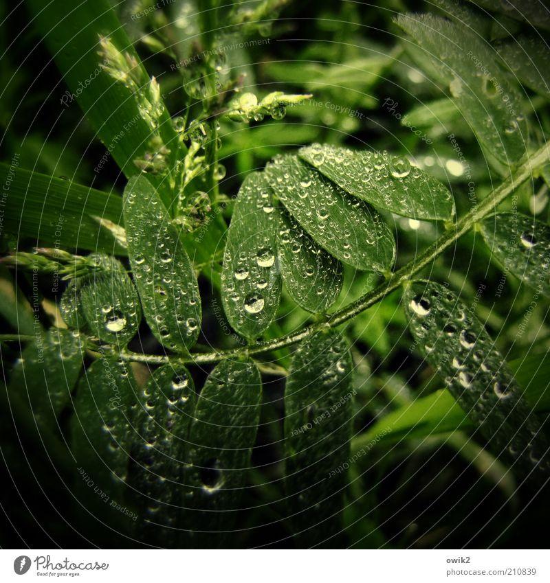 Regenwald Umwelt Natur Pflanze Wasser Sommer Klima Wetter Sträucher Blatt Grünpflanze Wildpflanze glänzend grün Wassertropfen Niederschlag natürliche Farbe nass