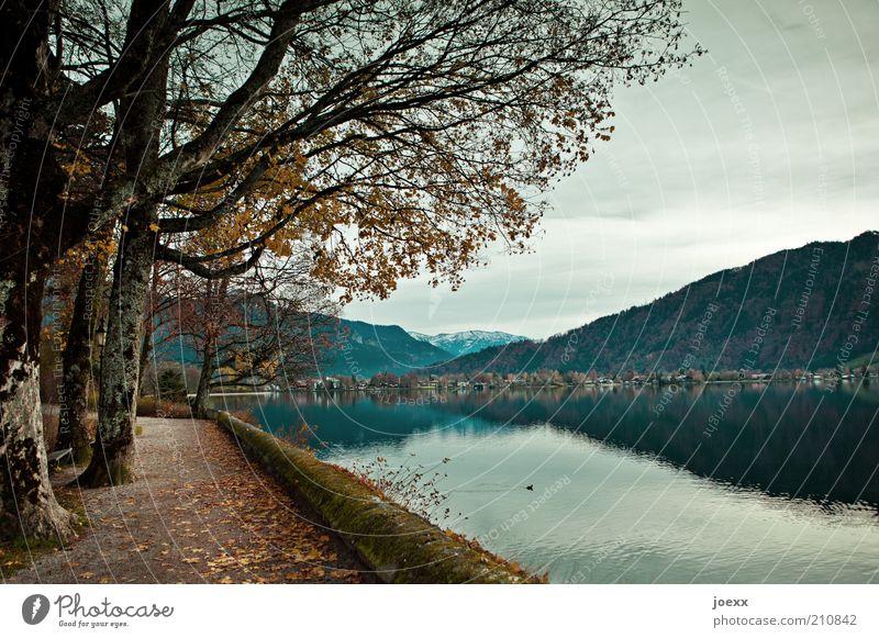 Seeweg Natur Herbst Baum Berge u. Gebirge Seeufer blau braun ruhig Idylle Tegernsee herbstlich Traurigkeit Farbfoto Gedeckte Farben Außenaufnahme Menschenleer