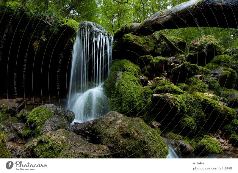 nature 2.2 Natur Baum grün Sommer Wald dunkel Bewegung Linie Zufriedenheit nass Felsen Wachstum authentisch rein natürlich Flüssigkeit