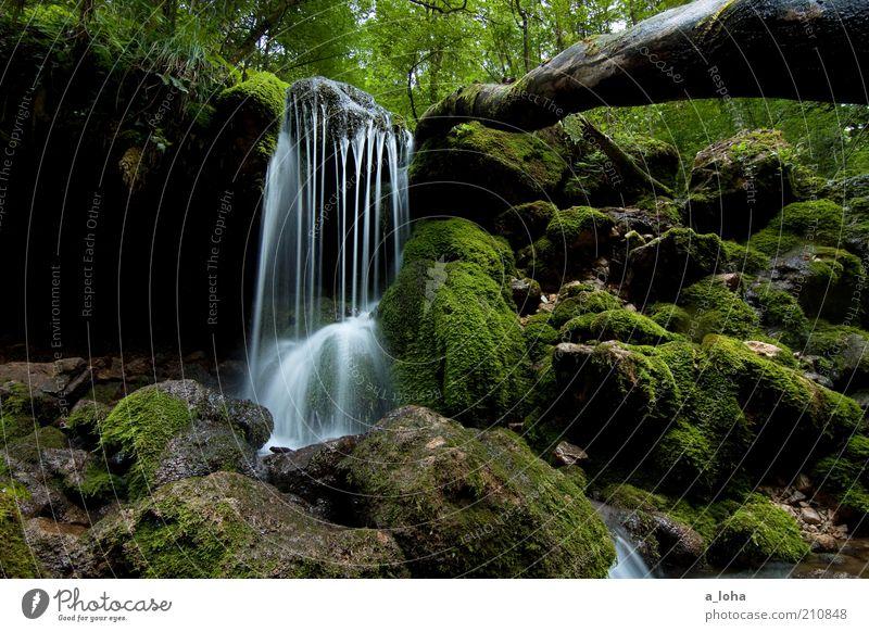 nature 2.2 Natur Urelemente Sommer Baum Moos Wald Felsen Bach Wasserfall Linie Bewegung Wachstum authentisch dunkel Flüssigkeit nass natürlich grün
