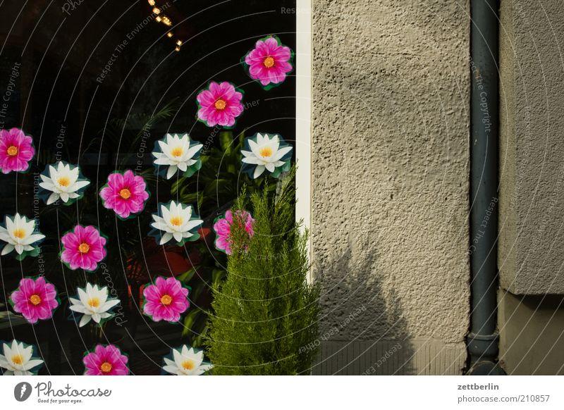 Blümchenmulti/Nachtrag Natur schön Baum Pflanze Sommer Haus Wand Fenster Blüte Design Umwelt Kitsch Dekoration & Verzierung einzigartig Idylle Schmuck