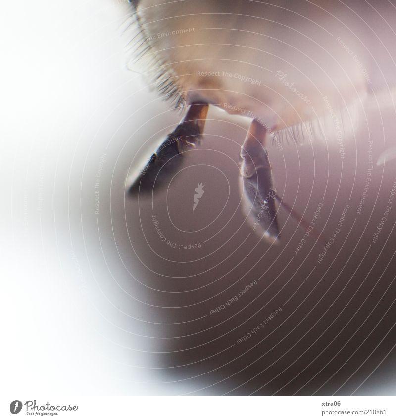 fühler Tier Insekt Fühler Makroaufnahme