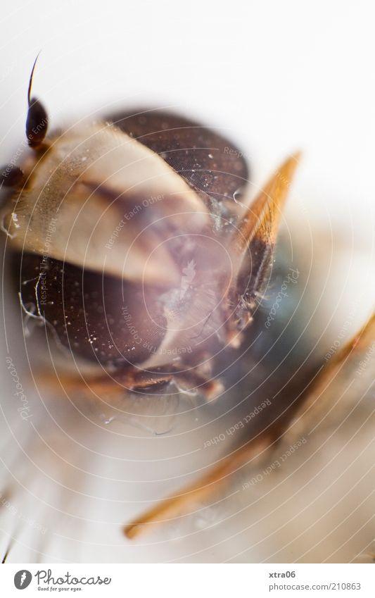 schau mir in die augen Tier Insekt Facettenauge Fühler Beine Kopf Tiergesicht Tierporträt Farbfoto Nahaufnahme Detailaufnahme Makroaufnahme Hintergrund neutral
