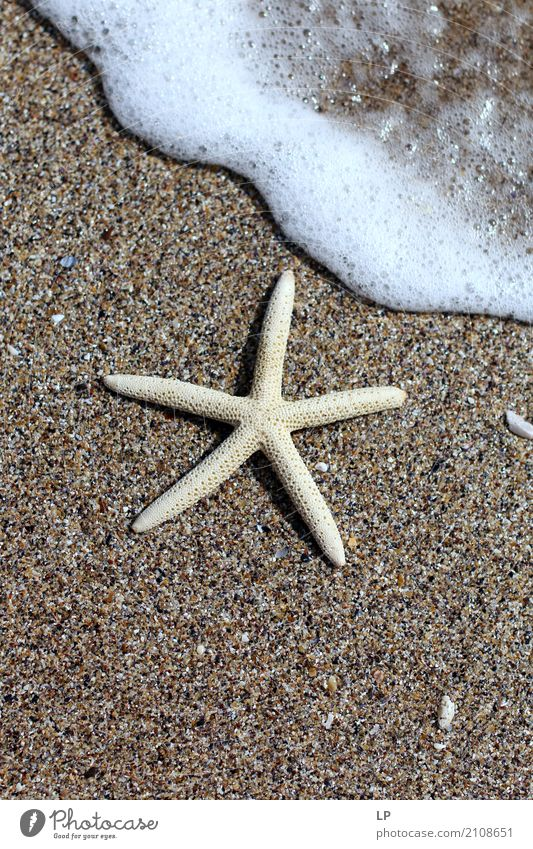 Seestern am Strand Ferien & Urlaub & Reisen Meer Erholung ruhig Leben Lifestyle Innenarchitektur Gefühle Tourismus Häusliches Leben Freizeit & Hobby