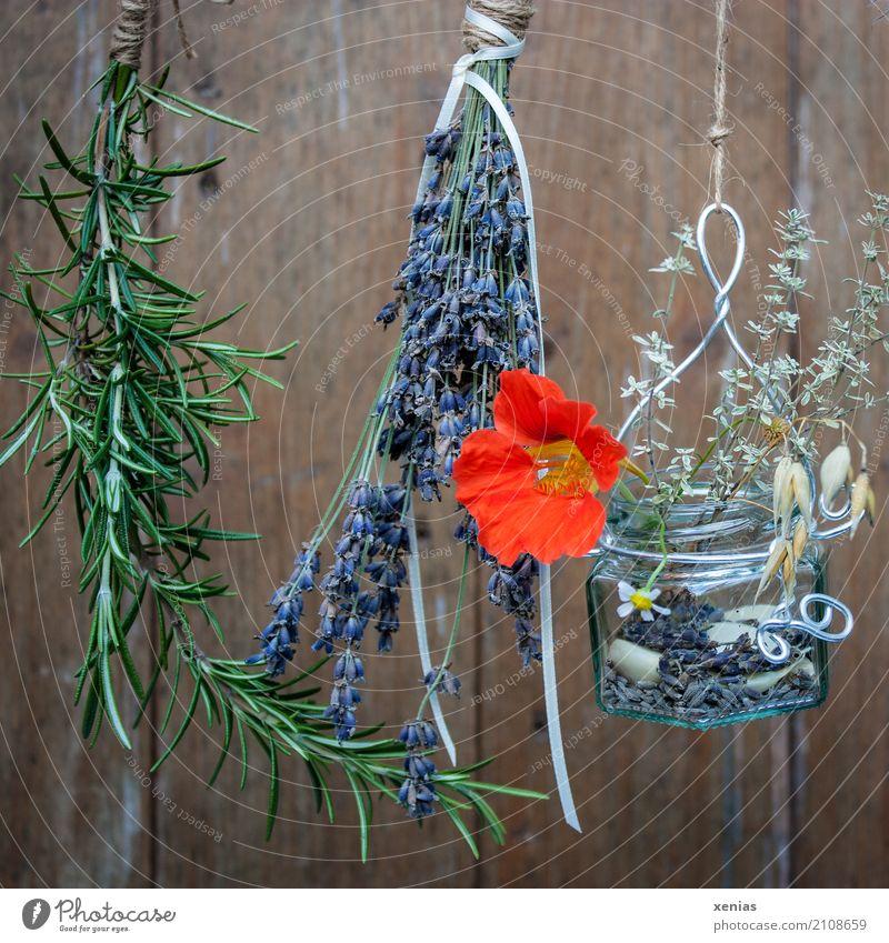 Den Sommer festhalten.. grün Holz braun orange Glas Schnur violett Getreide hängen trocknen Lavendel Rosmarin Thymian Kamillenblüten Kapuzinerkresse