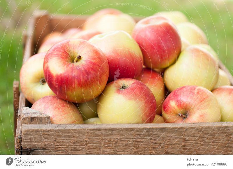 Reife Äpfel Gemüse Frucht Apfel Ernährung Vegetarische Ernährung Diät Sommer Menschengruppe Natur Baum Holz frisch hell lecker natürlich saftig grün rot Farbe