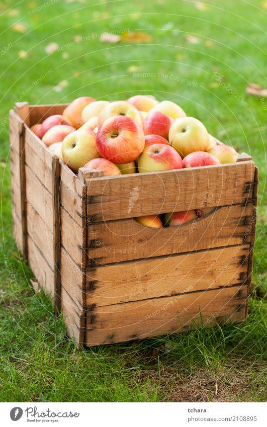 Reife Äpfel Gemüse Frucht Apfel Ernährung Vegetarische Ernährung Diät Sommer Natur Baum Blatt Holz frisch hell lecker natürlich saftig grün rot weiß Farbe