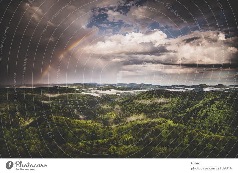 After the rain Natur Landschaft Pflanze Urelemente Luft Himmel Wolken Horizont Frühling Sommer Wetter Schönes Wetter schlechtes Wetter Regen Wald Hügel