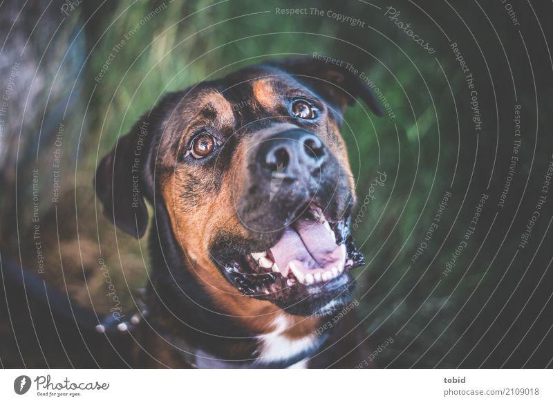 Ludwig Natur Schönes Wetter Gras Haustier Hund Tiergesicht Fell 1 beobachten sitzen Freundlichkeit Gefühle Glück Fröhlichkeit Zufriedenheit Lebensfreude