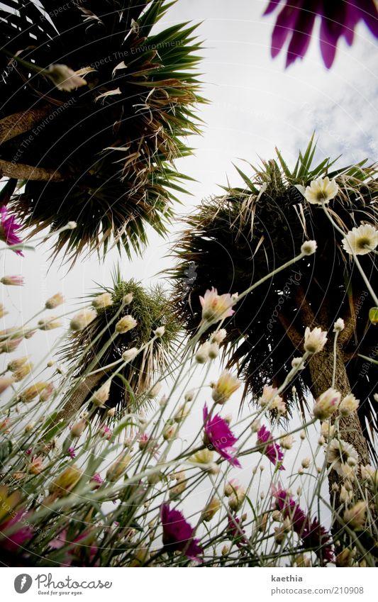 up in the air Natur Himmel Baum Blume Pflanze Sommer Wiese Blüte Garten Park rosa Umwelt Wachstum Insel Sträucher violett