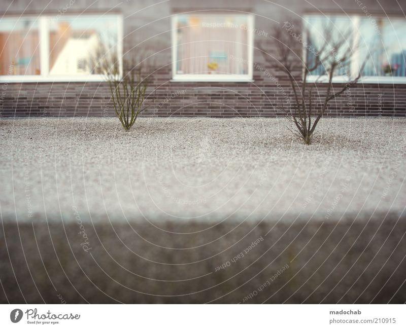 Vorhof zur Hölle Haus Fenster grau Fassade Ordnung trist Sauberkeit Bildausschnitt Tilt-Shift Wohnhaus