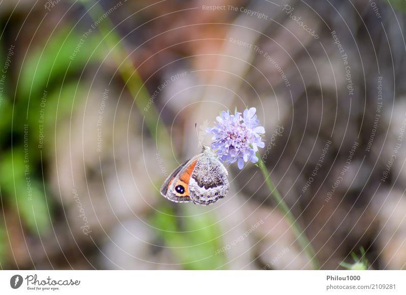 Orange Schmetterling warf auf malvenfarbene Blumen auf Design Leben Sommer Garten Kunst Umwelt Natur Tier Blatt Sammlung fliegen hell klein natürlich blau braun