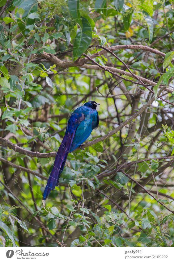 Farbklecks!!! Natur Ferien & Urlaub & Reisen Pflanze blau Sommer schön grün Baum Landschaft Tier Wald Umwelt Frühling Herbst Vogel elegant