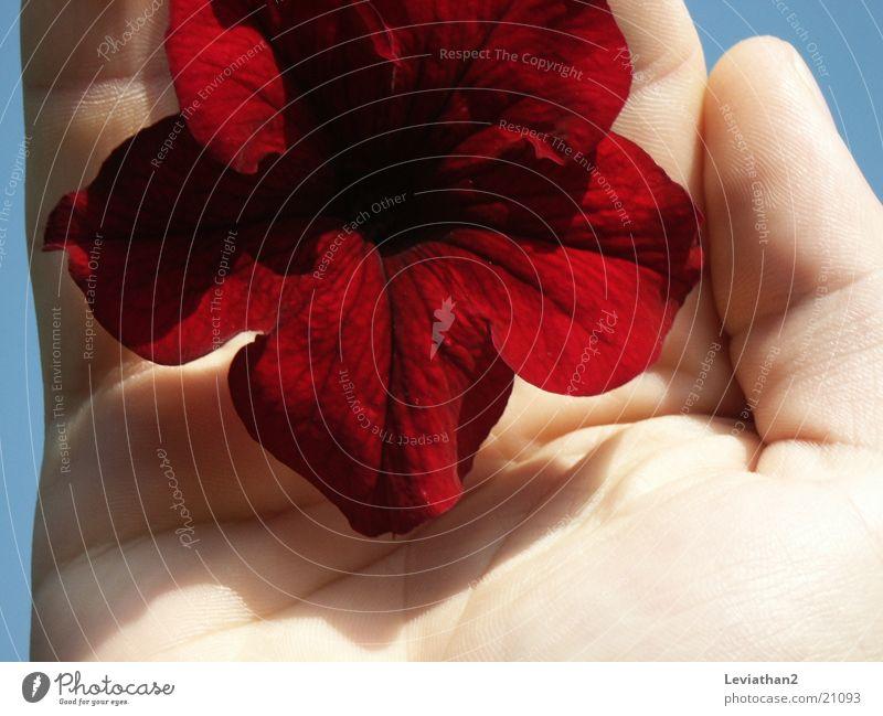 Fingerprints And Flowers Frau Mensch Hand rot Pflanze Blume Blüte intensiv Fingerabdruck