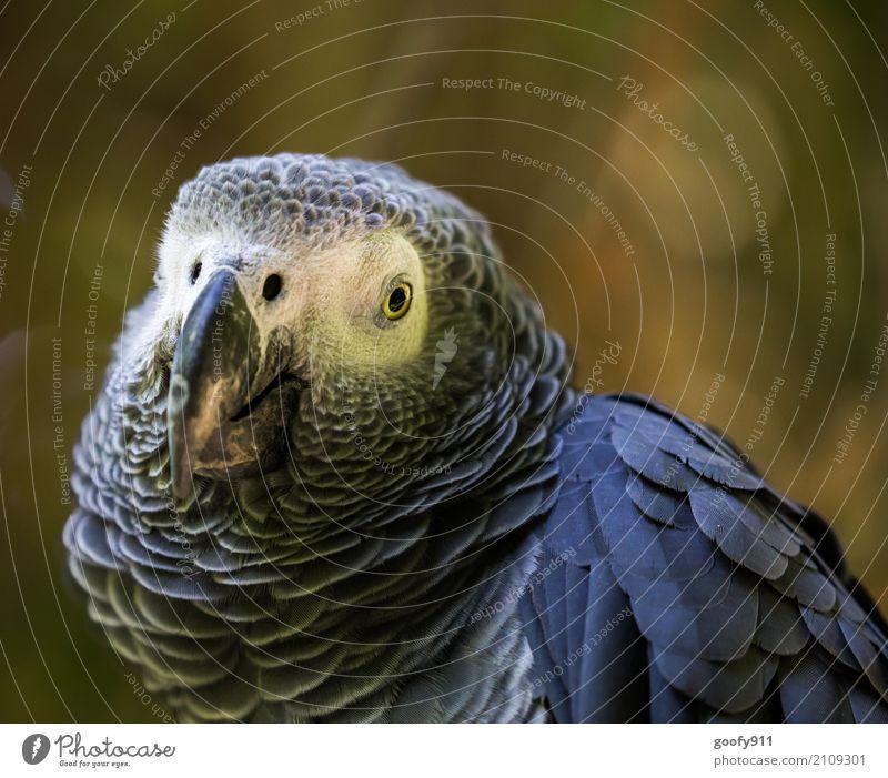 Ernster Blick!!! Umwelt Natur Frühling Sommer Wüste Tier Wildtier Vogel Tiergesicht Flügel Zoo Papageienvogel 1 beobachten Ferien & Urlaub & Reisen ästhetisch