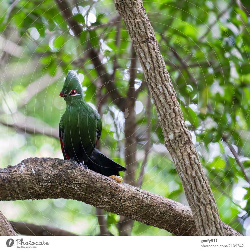 Modell stehen!!! Umwelt Natur Landschaft Pflanze Tier Sonnenlicht Frühling Sommer Schönes Wetter Baum Wald Urwald Südafrika Afrika Wildtier Vogel Tiergesicht