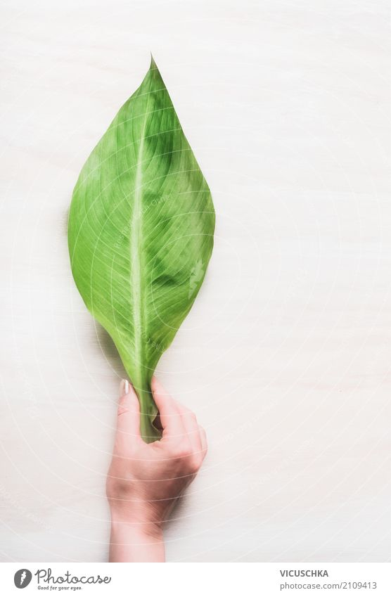 Weibliche Hand hält großes grünes Blatt Mensch Frau Natur Pflanze Sommer schön Erwachsene Leben Umwelt Lifestyle Hintergrundbild Gesundheit feminin Stil