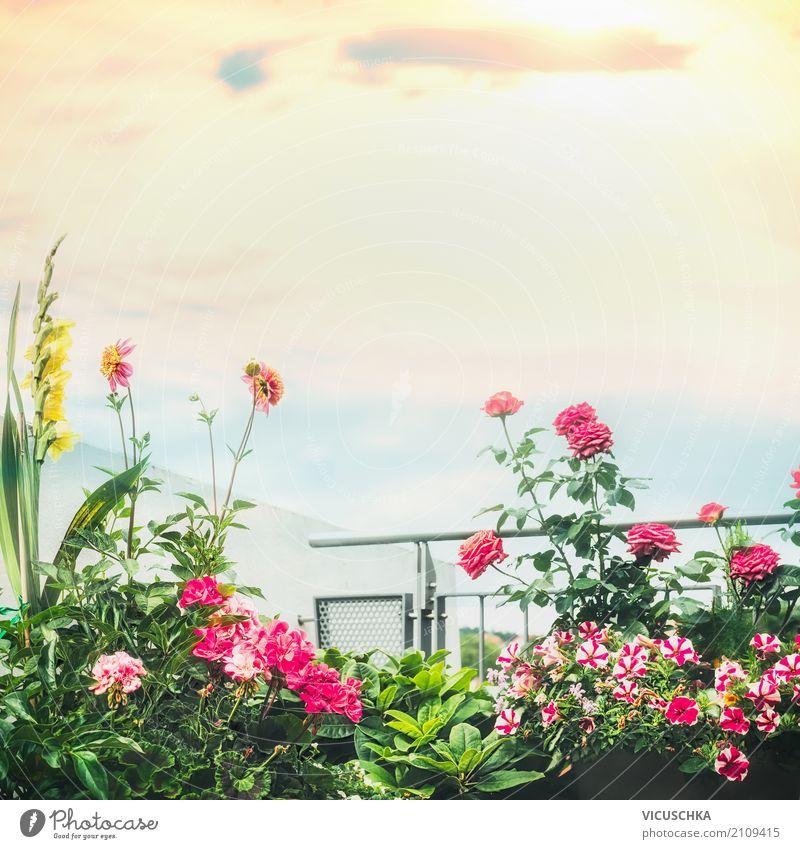 Schöne Balkon Blumen Lifestyle Design Ferien & Urlaub & Reisen Sommer Häusliches Leben Wohnung Natur Pflanze Topfpflanze Garten Stadt Terrasse rosa Stil