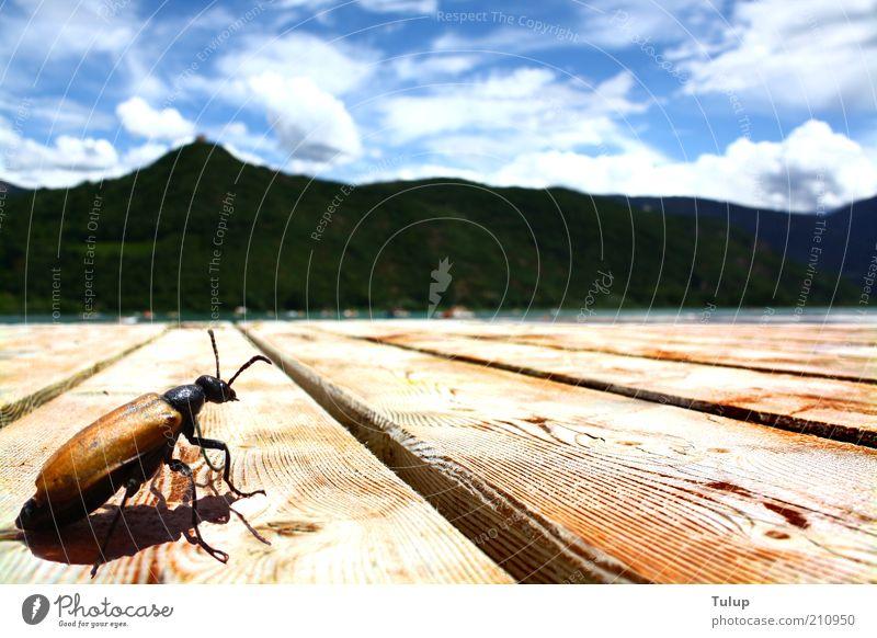 Sonnenbad am See blau ruhig Tier Erholung Glück Holz Wärme Zufriedenheit braun sitzen Steg Seeufer Ekel Schönes Wetter Sinnesorgane Käfer