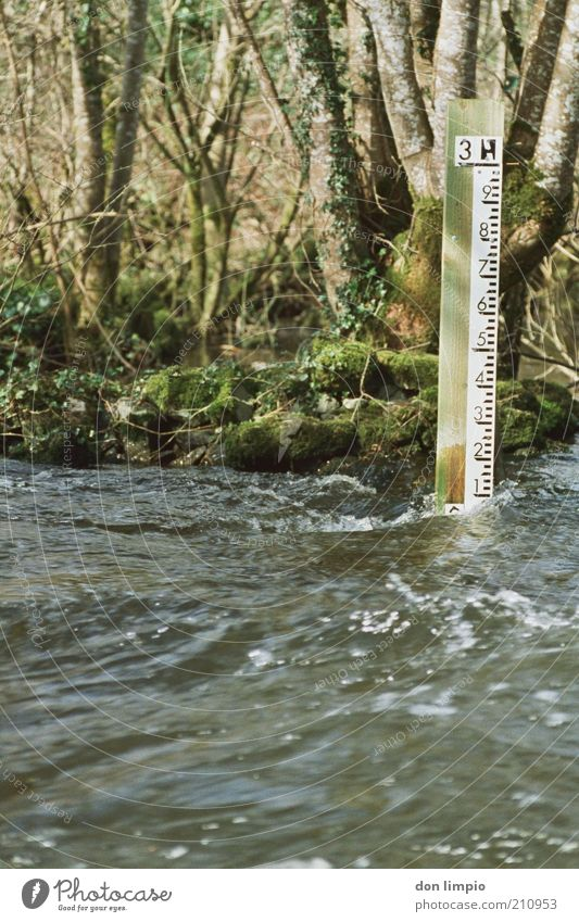 steigend Wasser Baum Herbst Frühling Umwelt hoch Fluss Zukunft bedrohlich Sträucher Ziffern & Zahlen fallen Wissenschaften Urwald Kontrolle Flussufer